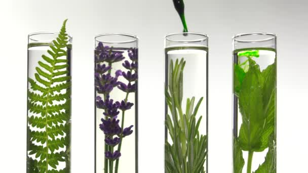 fern, lavender, rosemary and mint in test tubes