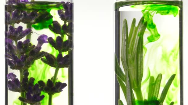 Lavender and rosemary in test tubes