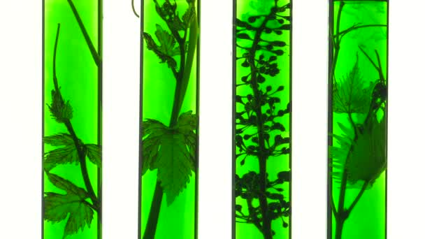 test tubes with green liquids and vine
