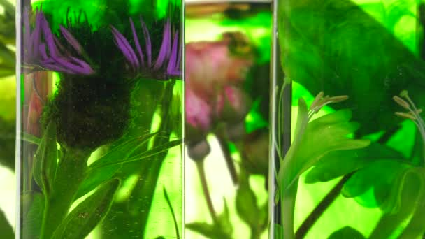 rose, honeysuckle, thistle and dandelion in test tubes turning