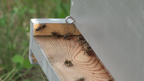bejárat a méhkas és a méhek jön és megy
