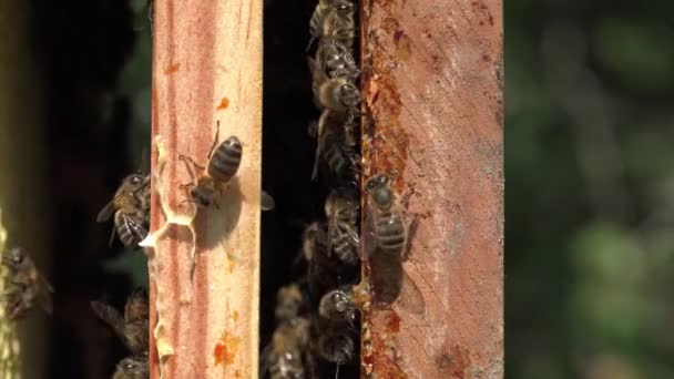 Close up of frames and their bees