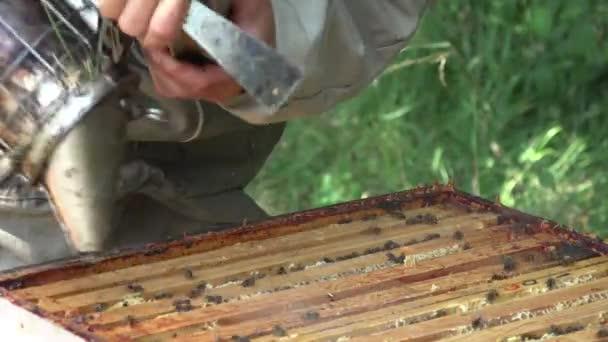 a méz extrakció előtt keretek eltávolítása
