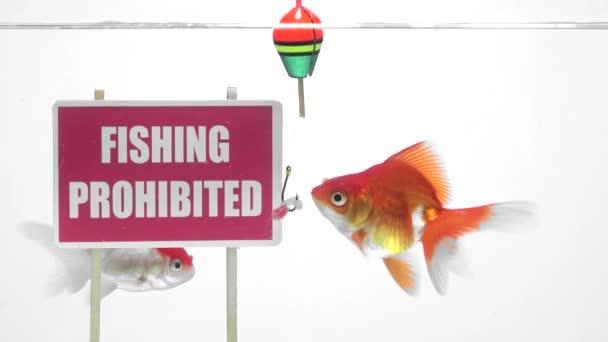Zakázáno lovit rybičky před panelem