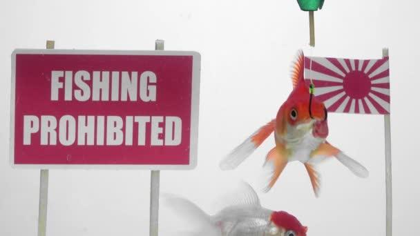 Aranyhal úszás előtt egy panel halászat tilos