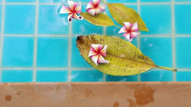 Plumeria flowers floating in water