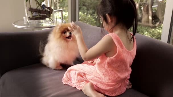 Little Girl Trains Her Dog, Pomeranian, by Giving Food with Her Hand.