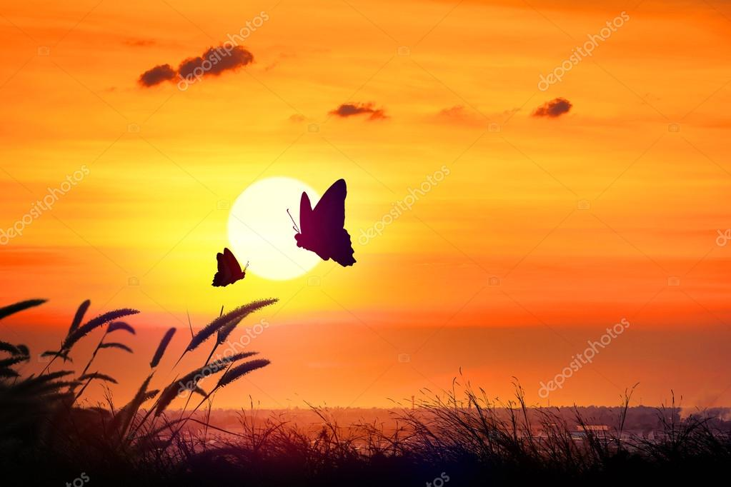 Silhouette of butterfly flying outdoor the sunset.