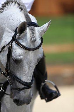 dressage white racehorse