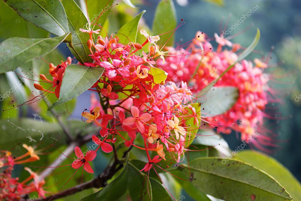 Arbre En Fleurs Rouge Floraison Rouge Arbuste Photographie Ada