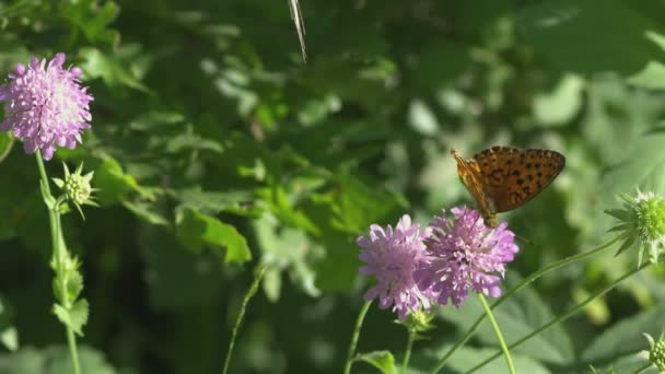 Slow motion butterfly and flower