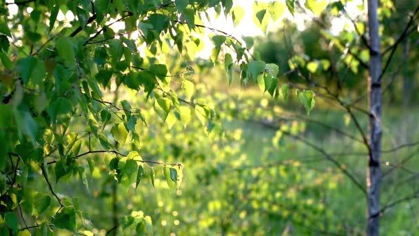 Jasné slunce svítí skrz stromy.
