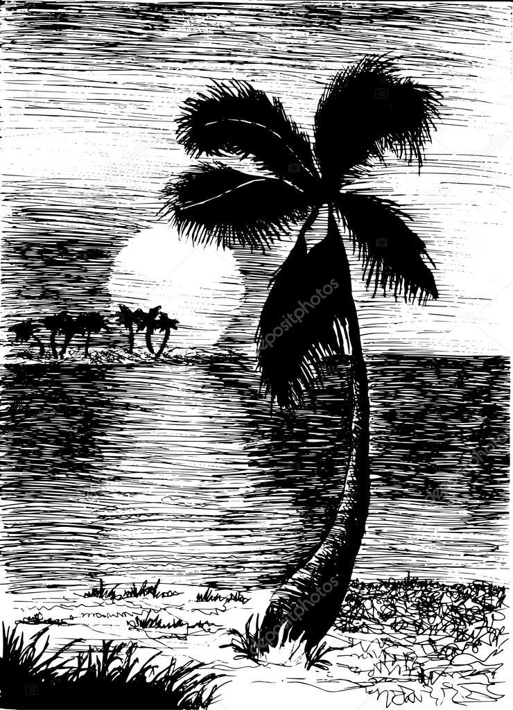 palm tree on island