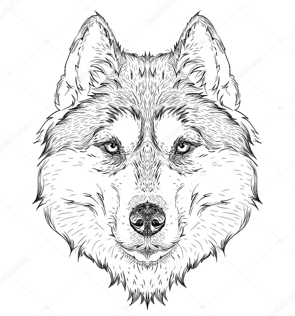 Hand draw husky portrait. Hand draw vector illustration