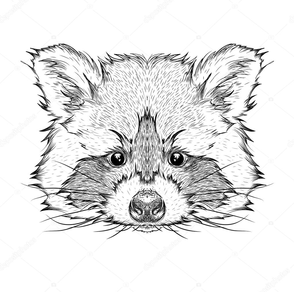 Hand draw raccoon portrait. Hand draw vector illustration