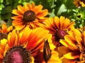 Květiny v zahradě v létě