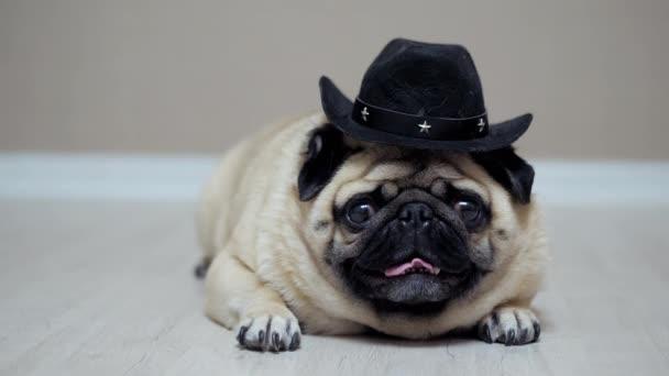 Vicces mopsz kutya portréja cowboy kalapba öltözve