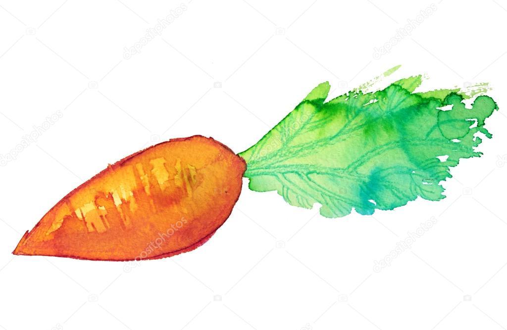 Carrot In Watercolor Stock Vector C Nato4kasova 124330502 Las zanahorias doradas nos restaurará y 14.4 puntos de saturación, lo más alto en el juego por ahora. https depositphotos com 124330502 stock illustration carrot in watercolor html
