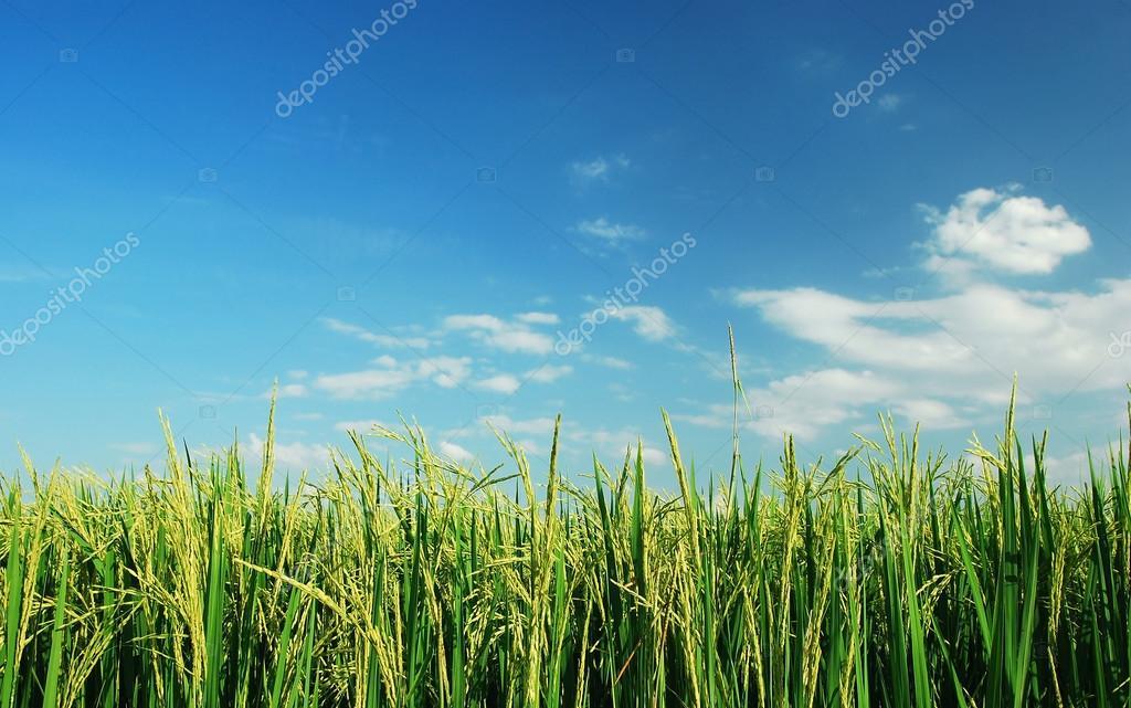 Yeşil çim Doğa Arka Plan Tasarımı Için Stok Foto Thaiview 77420324