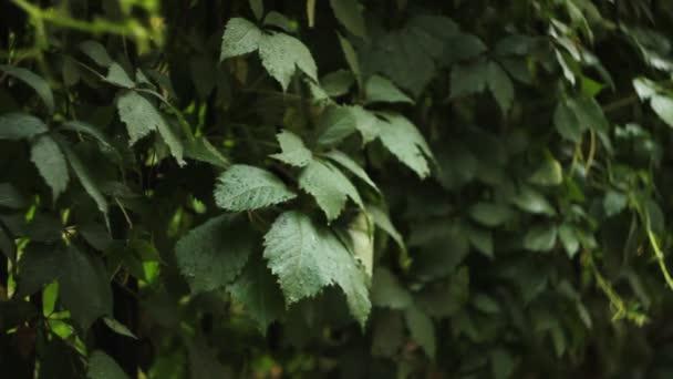 grüne Blätter unter Regen