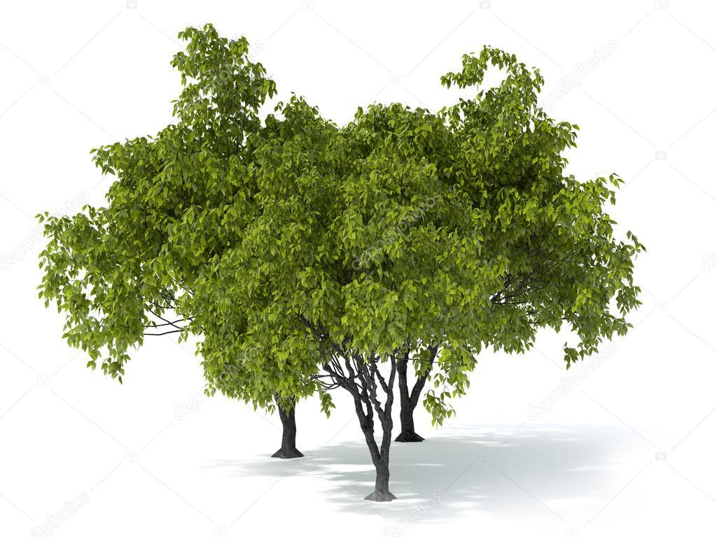 Foto albero sfondo bianco
