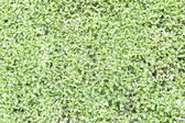 Moss texture, background
