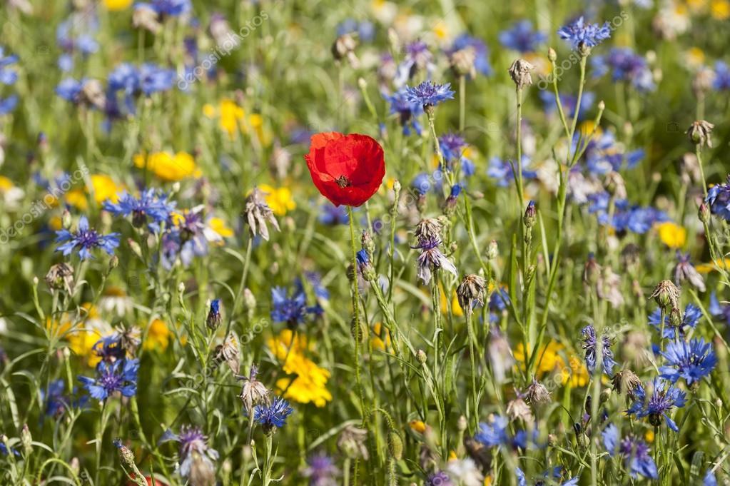 Un prato di fiori — Foto Stock © abiwarner #78259938