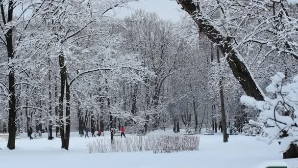 Winter landscape in snow-covered park.