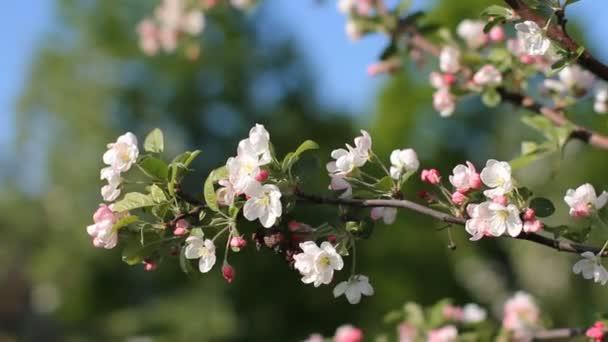 Jarní nálada. Jaro, slunečný den, kvetoucí zahrady