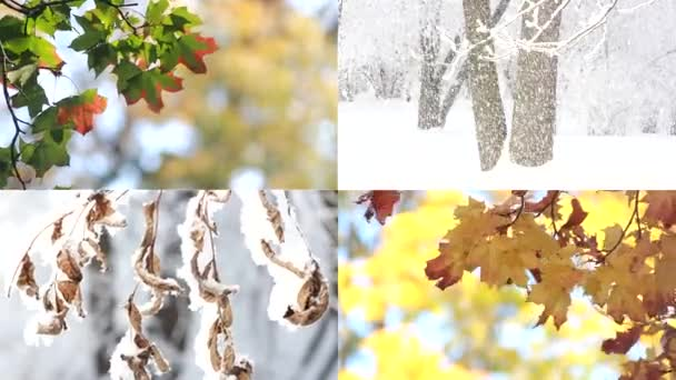 Seasons - a collage with views of autumn and winter nature. Golden autumn, colorful leaves on the trees. Snowy winter, blizzard and blizzard, frost on the trees.