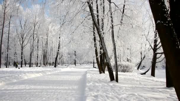 Zimní krajina - zasněžený park s krásnými stromy, pokrytý chocholem. Vánoční obrázek - zimní les, slunečný den v pohádkovém parku.