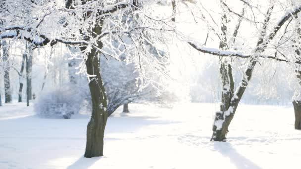 Winterlandschaft - ein schneebedeckter Park mit schönen Bäumen, die mit Raureif bedeckt sind. Ein Weihnachtsbild - ein Winterwald, ein sonniger Tag im Märchenpark.