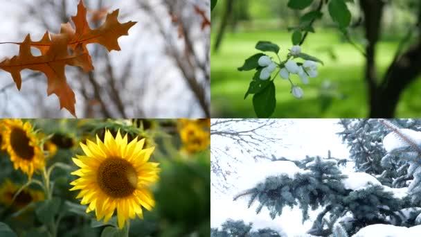 Sezóny, koláž - léto, podzim, zima, jaro. Zimní krajina byla natočena 16. února 2021 v Rusku, město Petrohrad, Yekateringof park, dům číslo 12 na Liflyandskaya ulici.