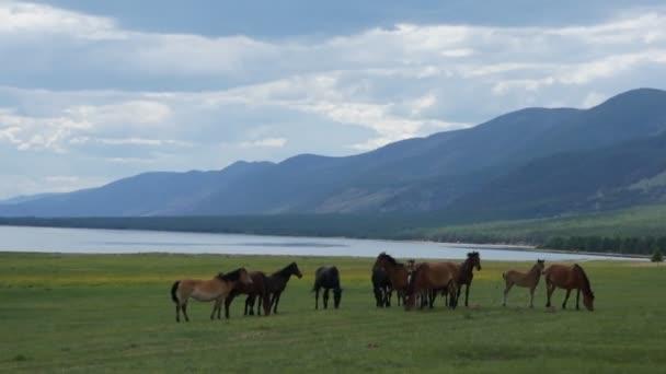 Pferd, Pferdeherde, Weide