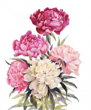 Bouquet of peonies watercolor.Iillustration for vintage greeting