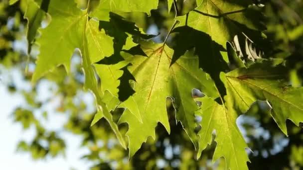 Listoví stromu.