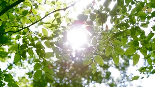 Zelené listy v lese slunce prosvítající pobočky.