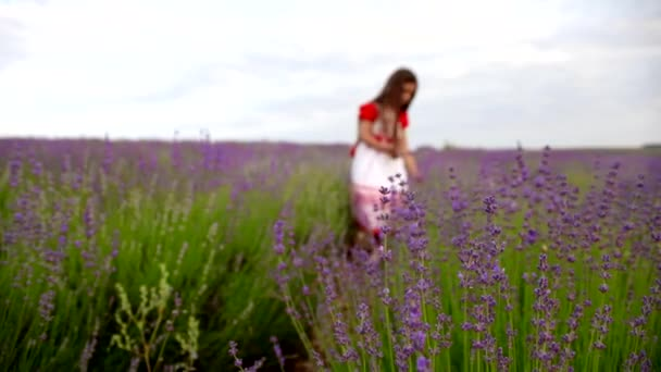 Lány gyűjtő virágok-levendula mező