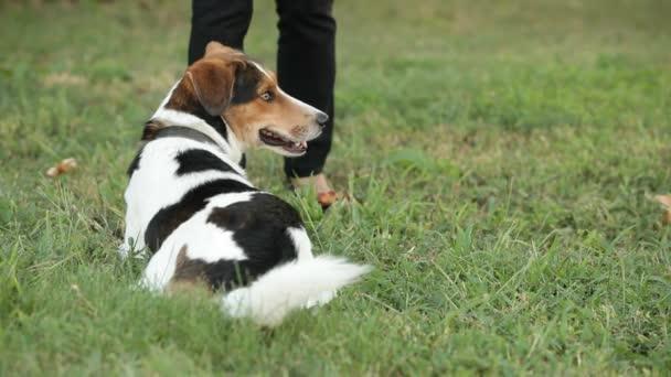 kutya képzés