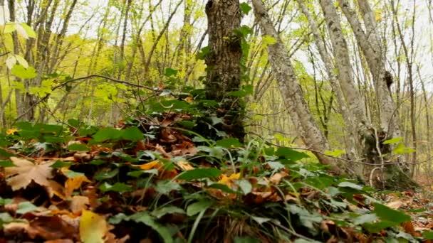 erdei növények