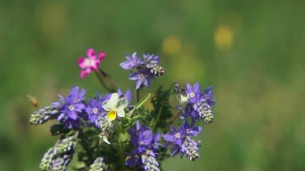 fialová kytice