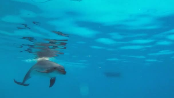 Underwater Dolphin playing with a child