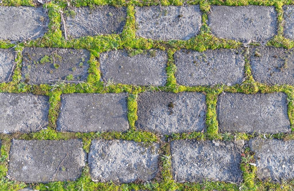 Viejo muro de piedra cubierto con plantas rastreras — Foto de stock ...