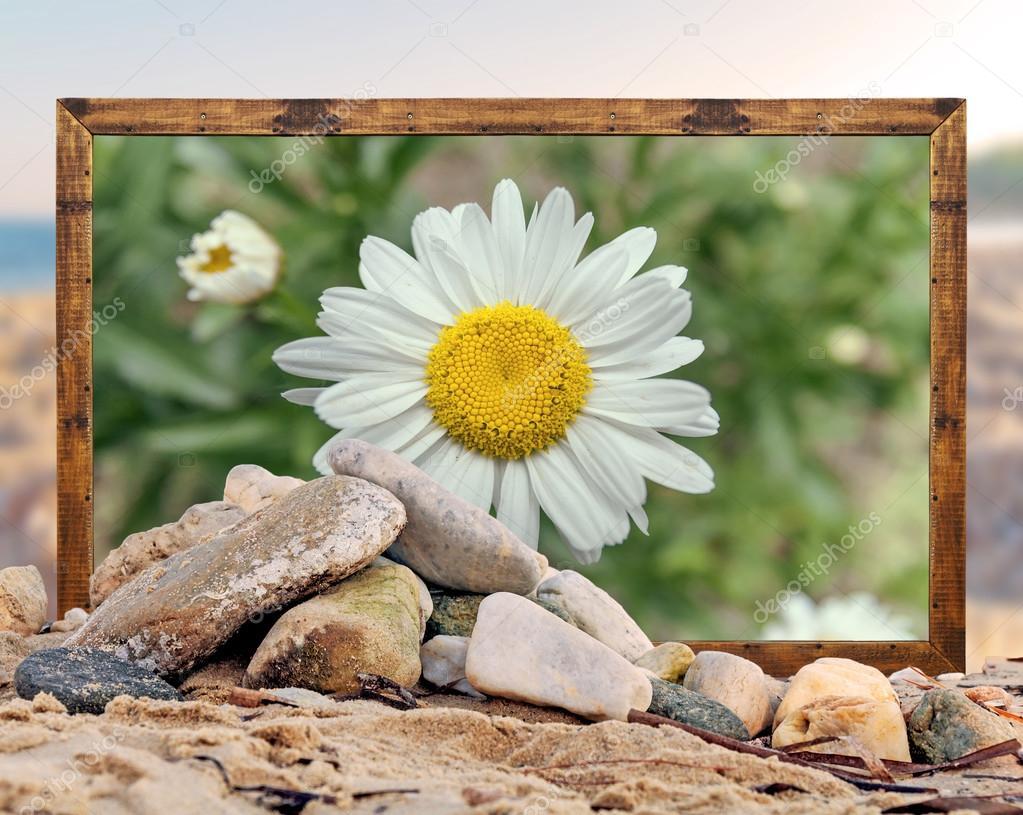 Felsen am Strand mit schönen Gänseblümchen Blume Bilderrahmen und ...