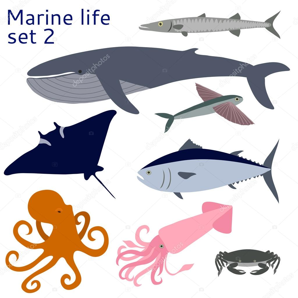 Fish and other marine life