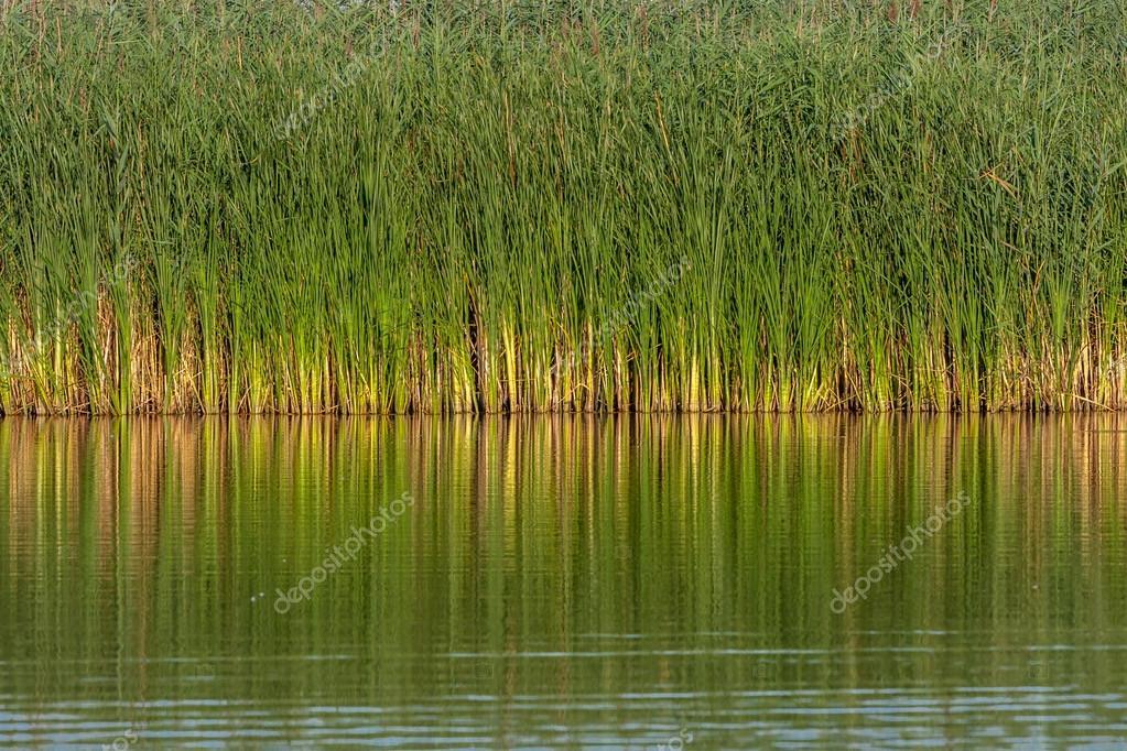 Water en riet u2014 stockfoto © fotosingb #84865126