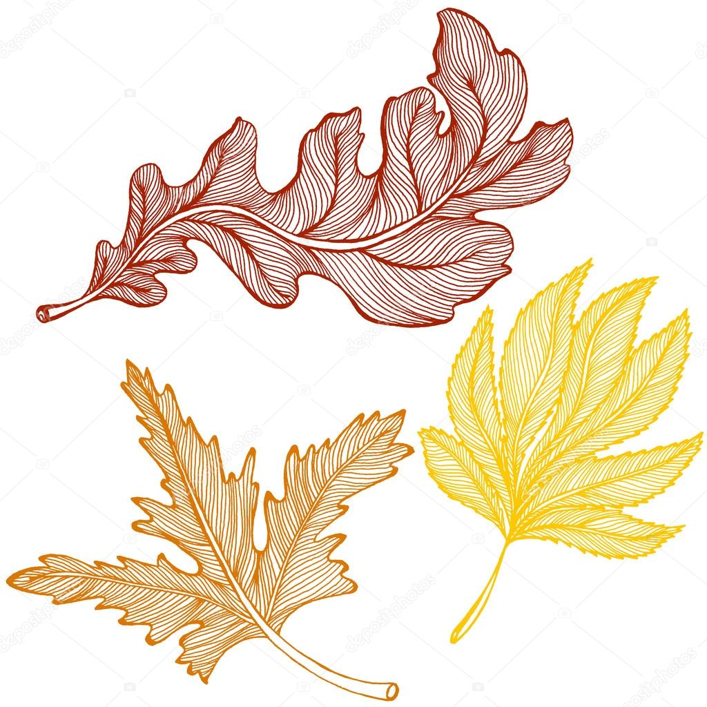 рисунки листьев осенних фото