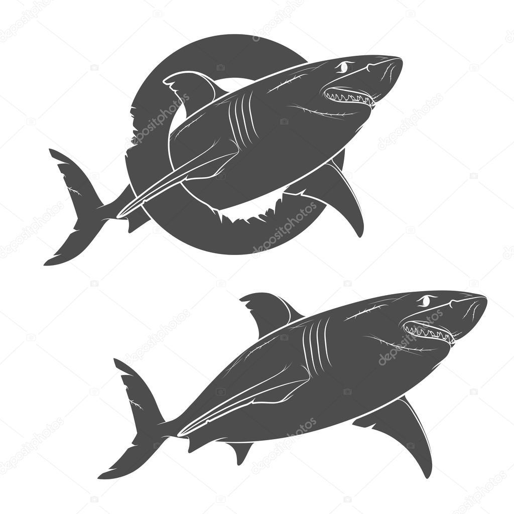 Desenho De Um Tubarão Terrível Vetorial