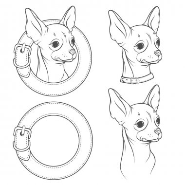 A set of vector drawing of the chihuahua in the collar.