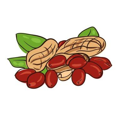 peanut in nutshell